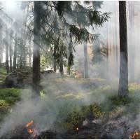 Hohe Waldbrandgefahr und Waldbrandschutzverordnung