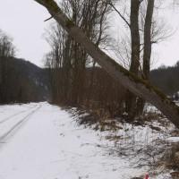 Motorsägen- und Windbruchübung